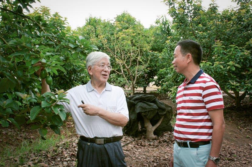 Tropical agriculture expert He Guoxiang (left) talks to Xiong Guanshui in Nanning, Guangxi Zhuang Autonomous Region, March 9, 2017. Chen Na/Sixth Tone