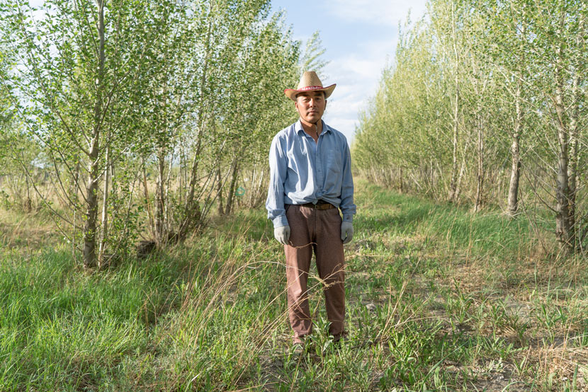 Tong Mandula stands amid trees he planted to break the wind in Horqin, Inner Mongolia Autonomous Region, June 7, 2016. Chen Xi/Sixth Tone