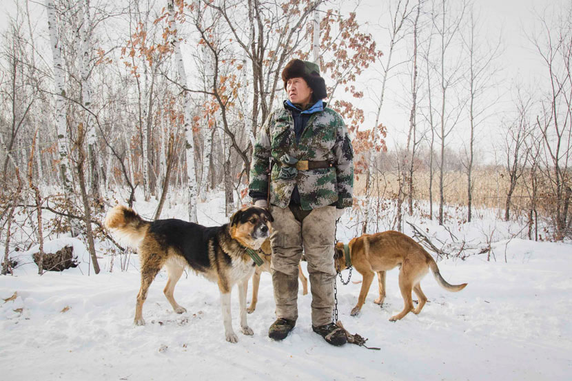 Ge Chunyong stands with dogs in the forests of the Lesser Hinggan Mountains, Heilongjiang province, Nov. 26, 2016. Zhou Pinglang/Sixth Tone