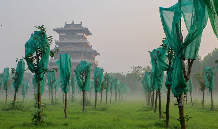 A mist covers a grove in Handan, Hebei province, Aug. 29, 2020. People Visual