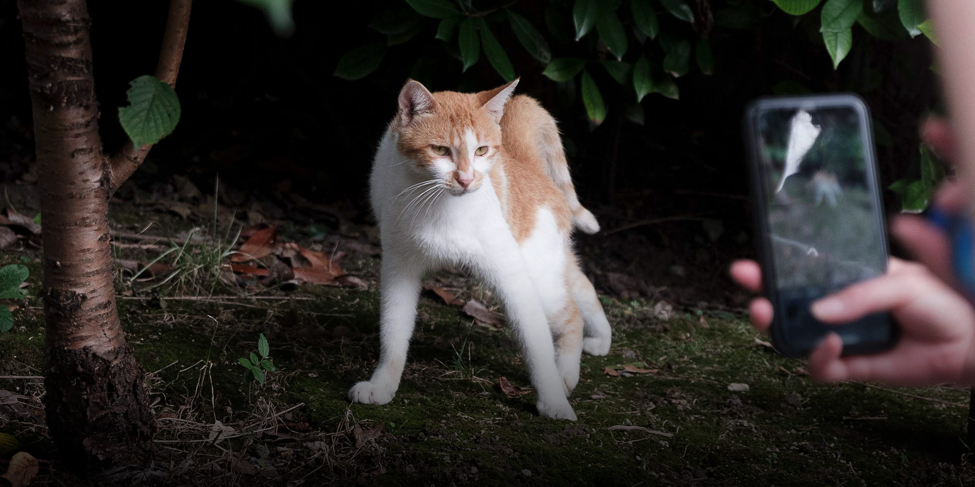 Shanghai Confronts a Furry Pest Problem: Millions of Stray Cats