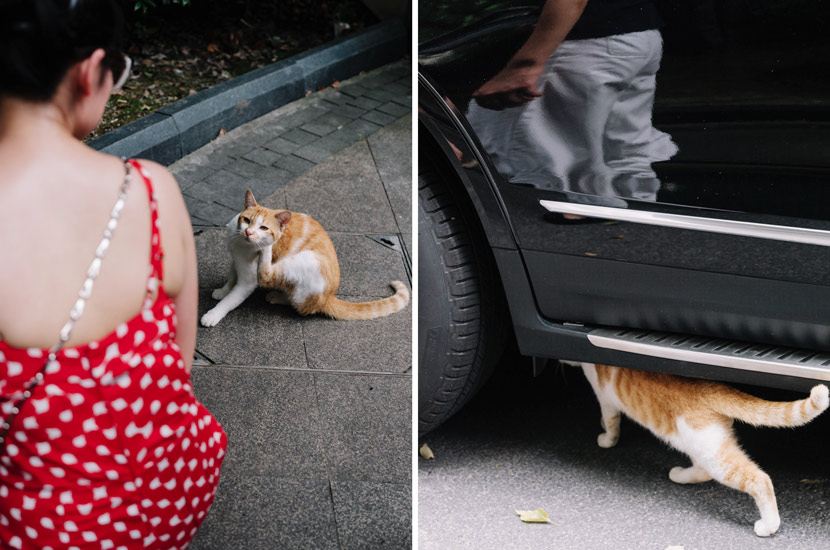 Stray cats in a community in Shanghai, Aug. 7, 2020. Zhou Pinglang for Sixth Tone