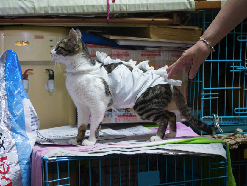 A stray cat is covered in gauze after getting desexed in Hangzhou. Zhejiang province, June 24, 2017. Rayfoto/People Visual