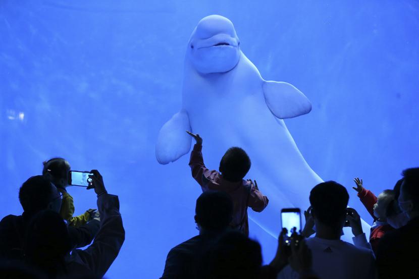 Visitors take photos at an aquarium in Guiyang, Guizhou province, Oct. 8, 2020. IC