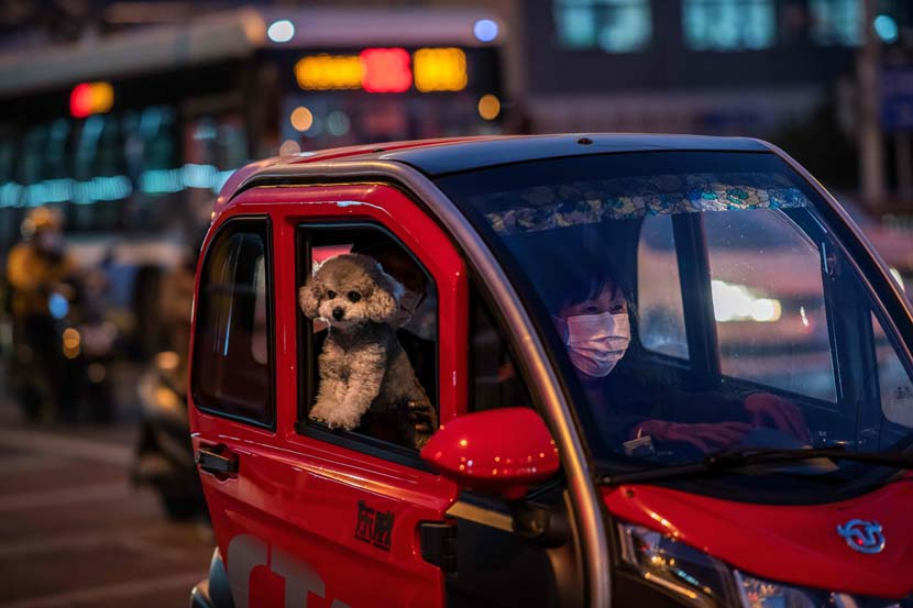 A woman in a face mask drives as her dog peeks out of the window during their rush-hour commute in Beijing, Oct. 15, 2020. Nicolas Asfouri/People Visual
