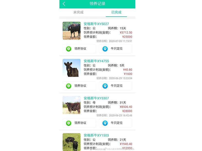 "A screenshot shows details of various ""cloud cattle"" on the Xinyue app. From The Paper"