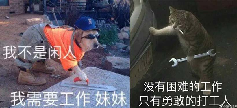"Two ""laborer"" memes featuring animals. From Weibo"