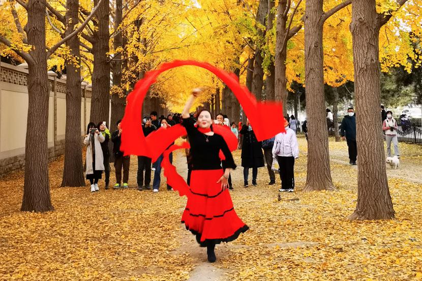 A woman dances with a ribbon amid the gingko trees in Beijing, Nov. 7, 2020. Zhang Jusheng/People Visual