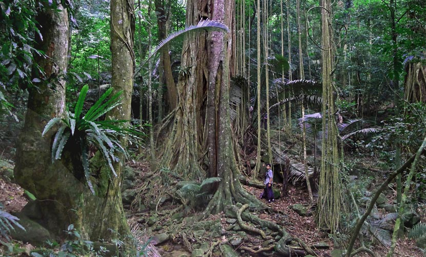 Biologist Bosco Chan stands in an old-growth section of forest in the Hainan Bawangling National Nature Reserve, 2010. Courtesy of Lu Gang/Kadoorie Farm & Botanic Garden