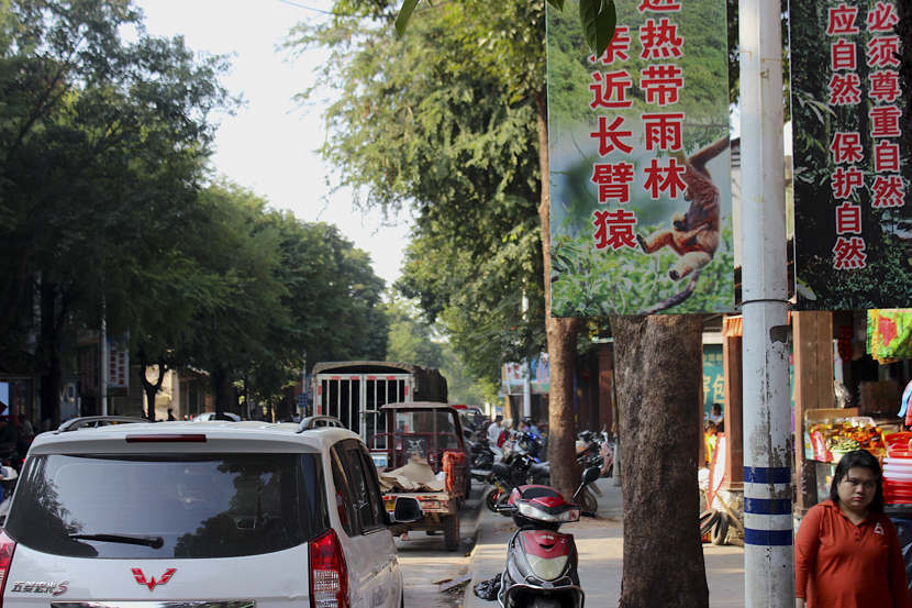 Banners in Baotie Town, which flanks Bawangling National Nature Reserve on the west, implore people to respect and protect nature, Hainan province. Courtesy of James Dinneen