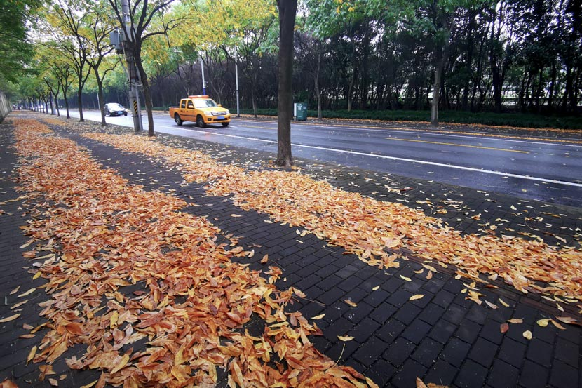 A view of a road covered in leaves in Minhang District, Shanghai, October 2020. IC
