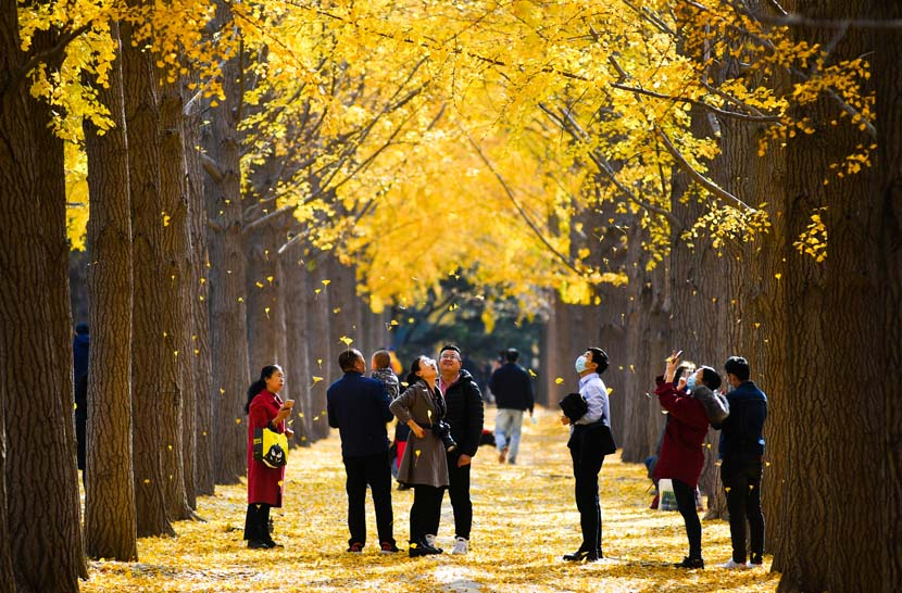 Residents take photos beneath the autumn foliage in Beijing, Nov. 13, 2020. People Visual
