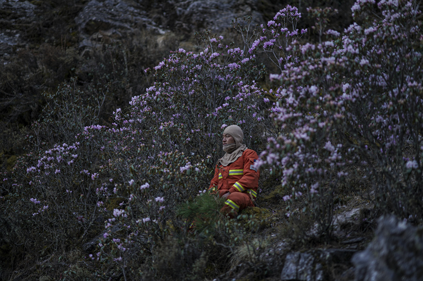 A firefighter rests in flowering shrubs in Sichuan province, April 2020. Cheng Xueli for Sixth Tone