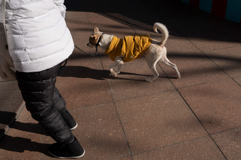 A man and his pet dog in winter clothes in Shanghai, Dec. 31, 2020. Shi Yangkun/Sixth Tone