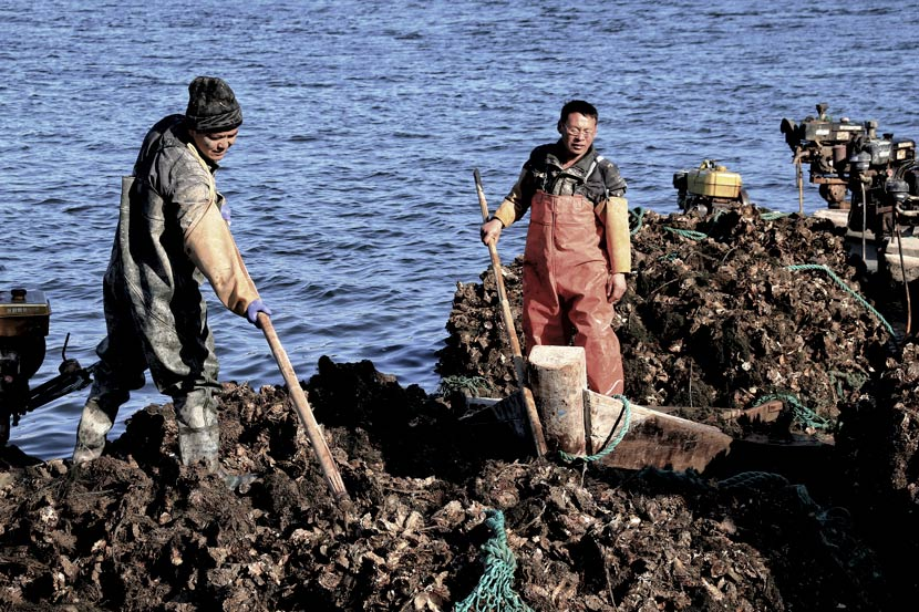 Workers collect oysters by the sea in Weihai, Shandong province, Dec. 25, 2020. Wang Wenmao/People Visual