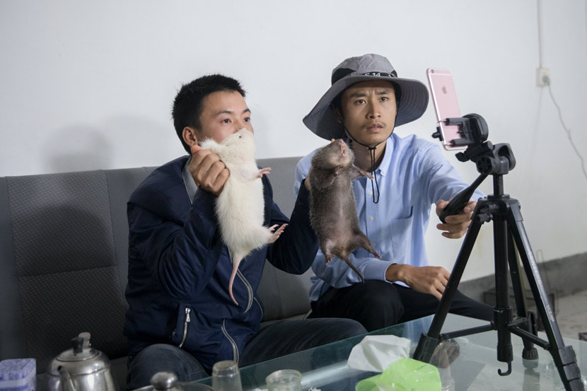Liu Suliang (left) and his partner Hu Yueqing host a livestream show at their bamboo rat farm in Ganzhou, Jiangxi province, Nov. 18, 2018. Chin Chen/People Visual