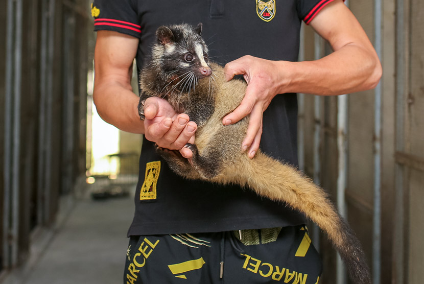 A worker holds up a civet cat at a farm in Yacha Town, Hainan province, Nov. 18, 2019. Yuan Chen/People Visual