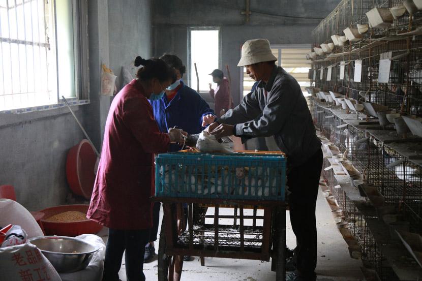 Workers unload supplies at Zhong Shengliang's pigeon farm in Pingyang County, Wenzhou, Zhejiang province, Dec. 12, 2020. Wu Peiyue for Sixth Tone