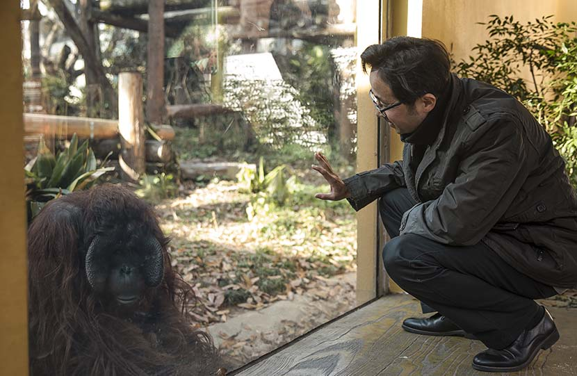 Shen Zhijun checks on an orangutan at Hongshan Forest Zoo in Nanjiang, Jiangsu province, Dec. 16, 2020. Courtesy of Guyu Lab