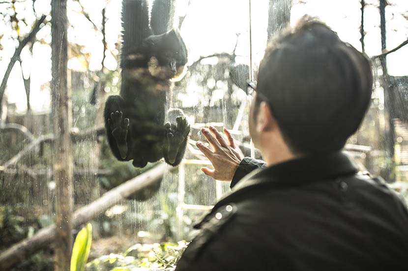 Shen Zhijun checks on the gibbons at Hongshan Forest Zoo in Nanjing, Dec. 16, 2020. Courtesy of Guyu Lab