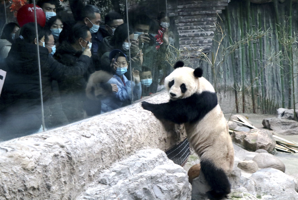 "Tourists visit the newest member of the Beijing Zoo's panda family, ""Bai Tian,"" Beijing, Feb. 11, 2021. Niu Yungang/People Visual"