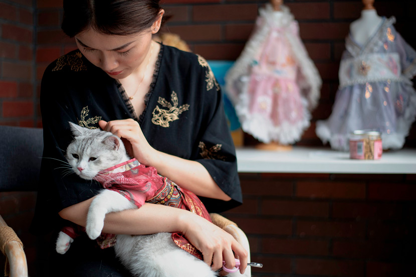 """The owner of a Taobao shop selling """"hanfu"""" gowns for cats pets one of her models in Changsha, Hunan province, Aug. 13, 2020. Noel Celis/People Visual"""