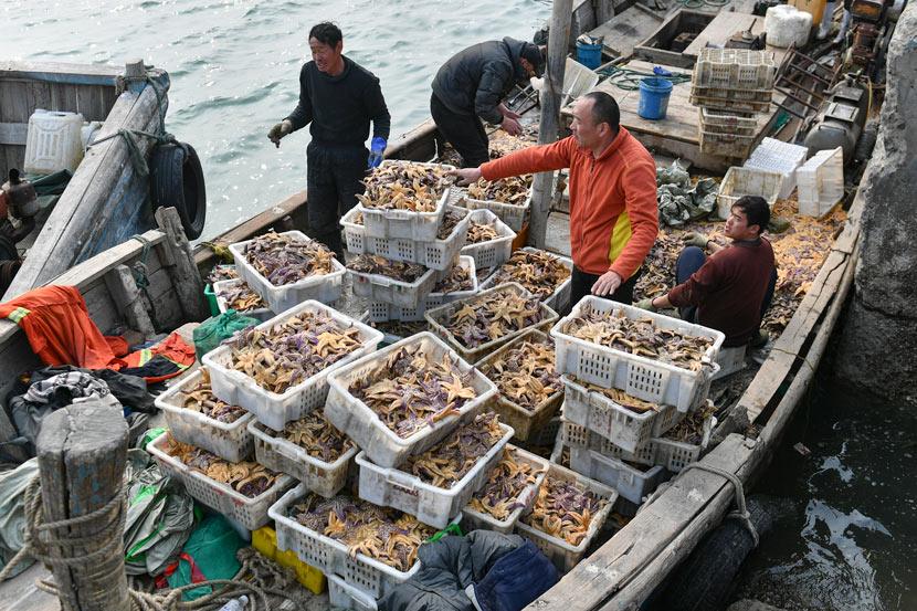 Workers sort sea stars at a port in Qingdao, Shandong province, March 13, 2021. Wang Haibin/People Visual