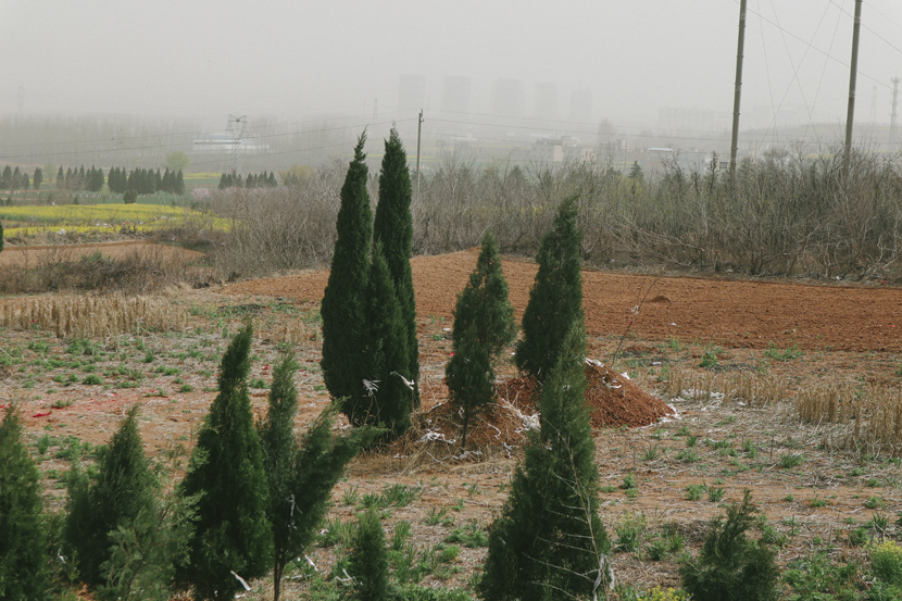 Graves can be seen in a local field near Luoyang Crane Memorial Cemetery, Henan province, March 2021. Yuan Ye/Sixth Tone
