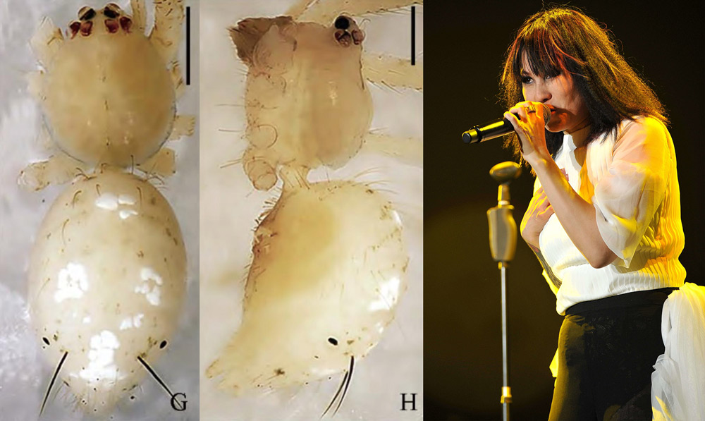 Left: The spider Meotipa luoqiae, viewed from different angles. From Red Star News; Right: Singer Luo Qi performs onstage, 2015. IC