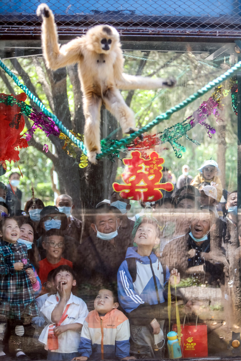 "Families look at a gibbon in a zoo in Jinan, Shandong province, May 2, 2021. The zoo's staff reportedly held a ""wedding"" for two of the gibbons. People Visual"