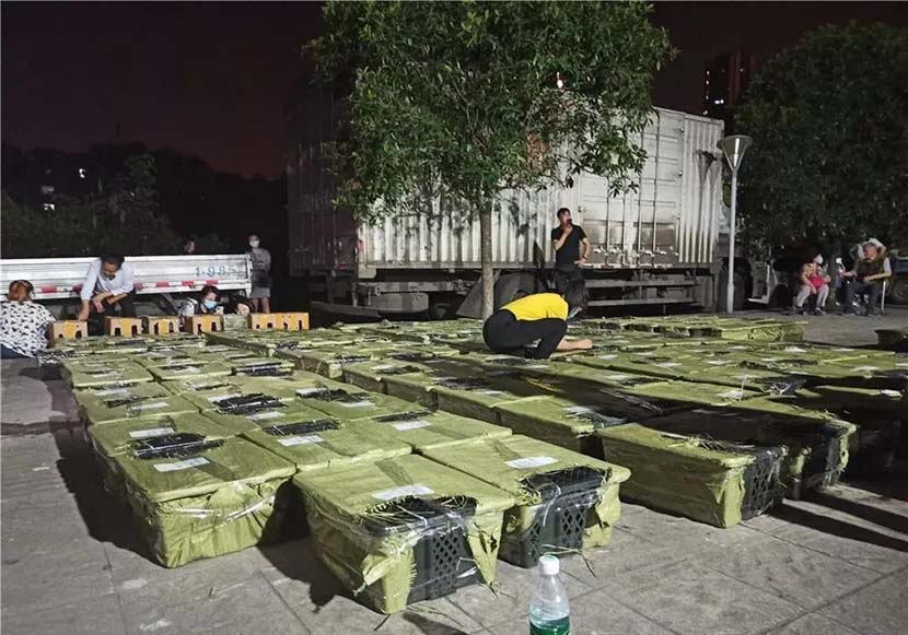 Members of an animal welfare group inspect a stack of boxes containing live animals at a logistics center in Chengdu, Sichuan province, May 3, 2021. From @河南法制报 on Weibo