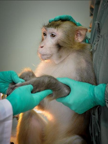 Researchers give a lab monkey a checkup in Guangzhou, Guangdong province, 2013. Liu Dawei/Xinhua