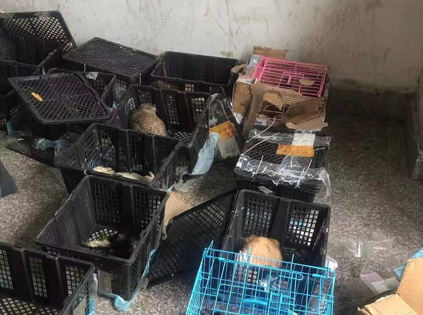 Crates containing animals are discovered at a ZTO Express depot in Suzhou, Jiangsu province, May 11. 2021. From @苏州市小动物保护协会 on Weibo