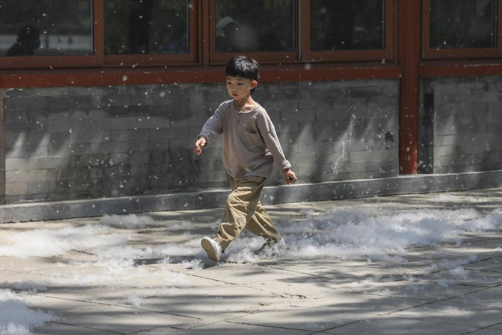 A boy walks through catkins in Beijing, April 19, 2021. Cheng Feng/IC
