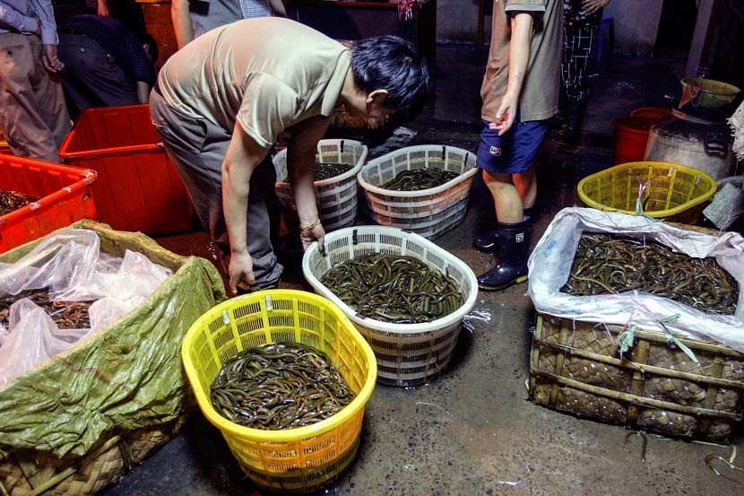 Eels sit in baskets at a market in Shanghai, July 13, 2005. Zhang Dong for Sixth Tone