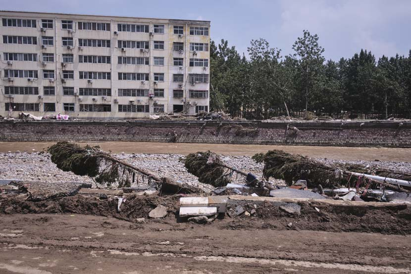 Toppled trees after record rainfall in Mihe Town, Henan province, July 24, 2021. Wu Huiyuan/Sixth Tone