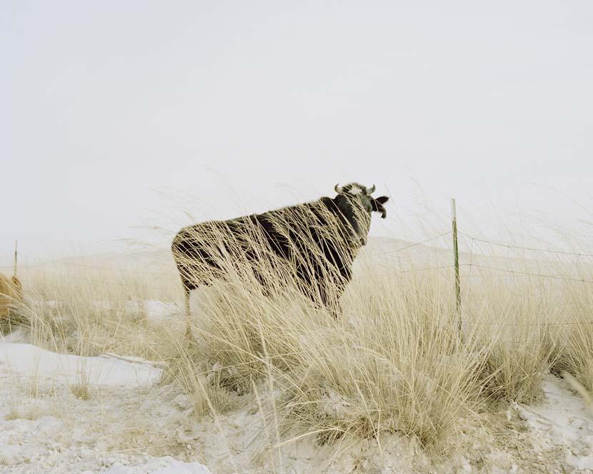 """The Good Earth,""  2008. Courtesy of Li Wei"