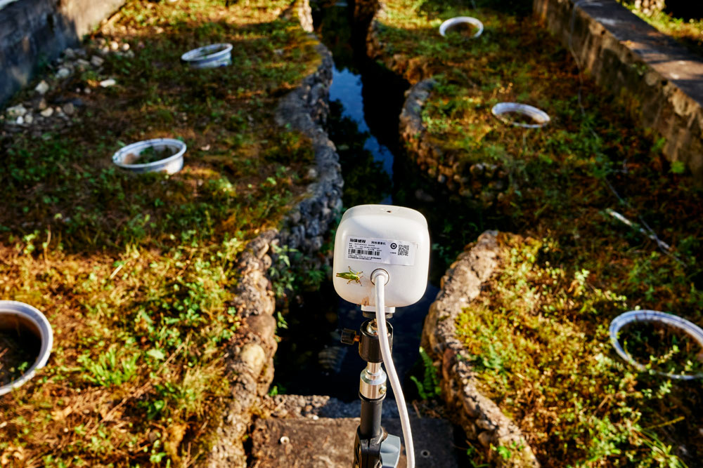 A camera used to monitor Chinese giant salamanders inside a pond that mimics natural conditions on the premises of the Zhangjiajie Giant Salamander National Nature Reserve Management Bureau, Hunan province, September 2021. Wu Huiyuan/Sixth Tone