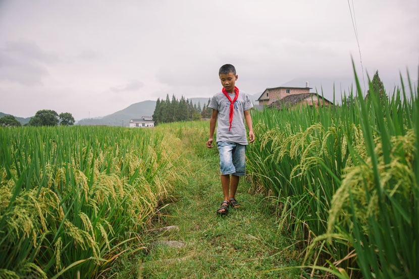 Lin Hongyu walks through a rice field in Matian Village, Luxi County, Jiangxi province, Sept. 6, 2017. Wu Huiyuan/Sixth Tone