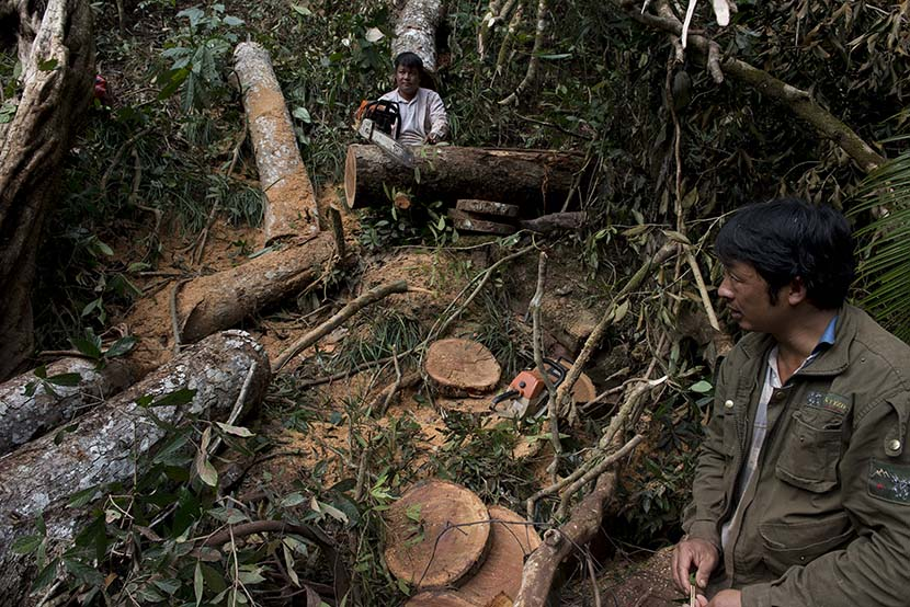 Workers cut down trees near the Huilong Mountain Hydropower Station in Mengla County, Yunnan province, Dec. 10, 2017. Courtesy of Wu Di