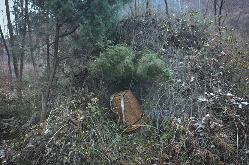 The grave of Wang Xiuping, Zhang Koukou's mother, is overgrown with weeds in Wangping Village, Shaanxi province, Feb. 19, 2018. Wang Jian for Sixth Tone