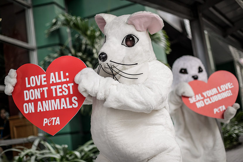 Animal rights advocates from PETA dressed as a rat and a seal hold up signs during a demonstration in Makati, Philippines, Feb. 13, 2017. Mark R. Cristino/EPA/IC