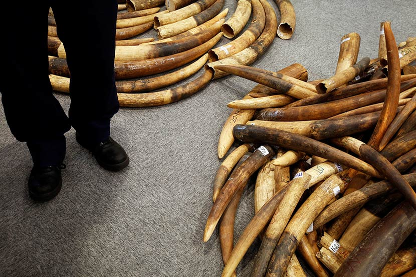 A Hong Kong customs officer stands beside seized ivory tusks at a news conference in Hong Kong, July 6, 2017. Bobby Yip/VCG